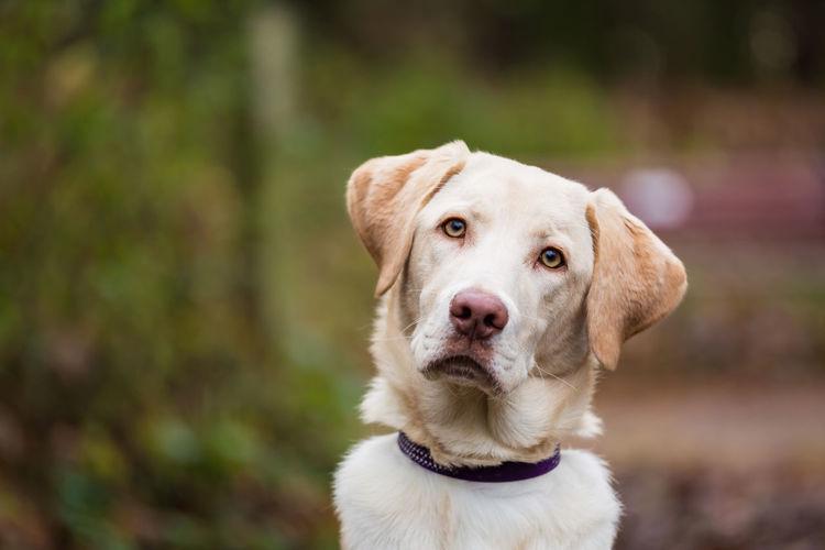 Close-up portrait of dog at park