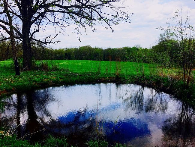 Tree Reflection Tranquility Green Color Water Beauty In Nature Nature Growth Tranquil Scene Grass Scenics Sky Outdoors Day Landscape No People Bare Tree Shaw Nature Reserve Pond Spring Day