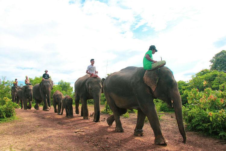 Men Riding Elephants On Field Against Cloudy Sky