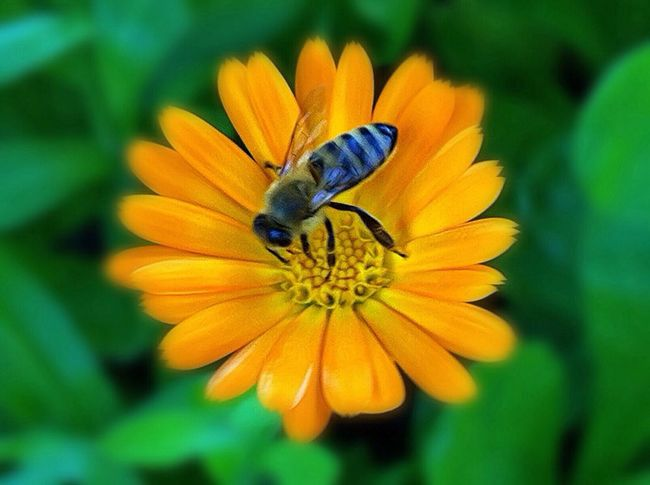 Bee Flowerporn Animals Nature Photography Nature On Your Doorstep EyeEm Best Shots Plants EyeEm Best Shots - Macro / Up Close The Week On EyeEm Jopesfotos - Nature