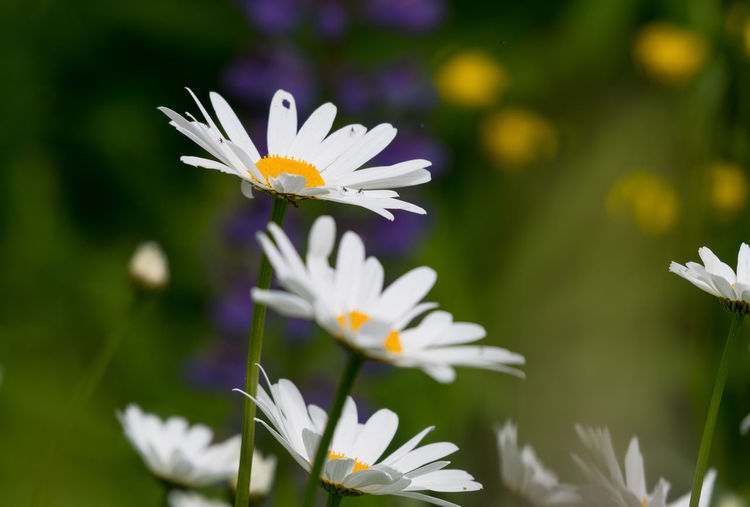 Blooming Close-up Day Flower Flower Head Focus On Foreground Fragility Freshness Leasure Activity Nature Nature Photography No People Ostsee Outdoors Pollen Springtime Vacation