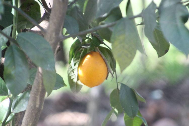 Leaf Fruit