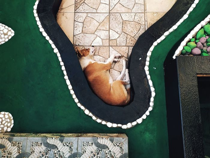 High angle view of a cat resting