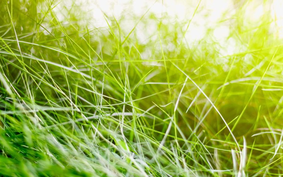 Grass Green Color Nature Full Frame Beauty In Nature Outdoors Colors Colorful Bright Asian  Wallpaper