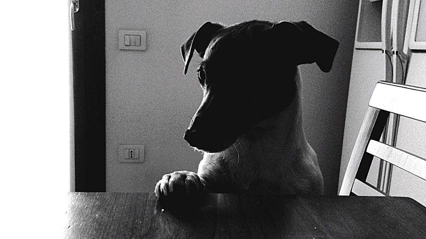 BadQuality Blackandwhite Dog Taking Photos Photography