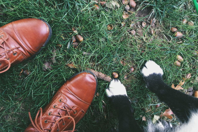 Abundance Boots Brown Carefree Close-up Directly Above Dirty Feet Focus On Foreground Friendship Fruit Green Color Healthy Eating Large Group Of Objects Leaf Leaves Part Of Paws Relaxation Relaxing