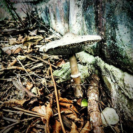 Nature Close-up Fungus Mushroom Shroom