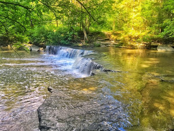 Nature Water Tree Waterfall Beauty In Nature No People Scenics Forest River Outdoors Day Tranquility Growth Landscape