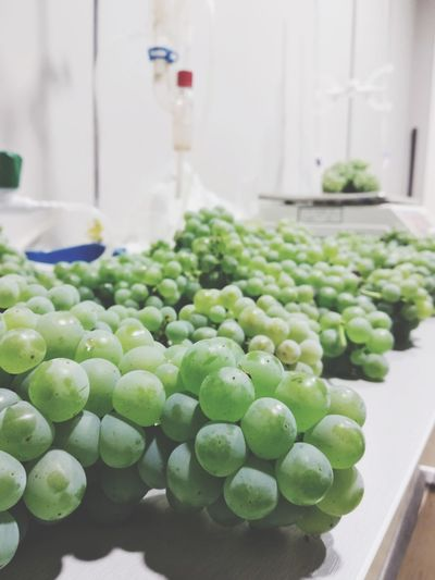 Vineyard Wine Nature Beauty In Nature Laboratory Fruit Agriculture Close-up Green Color Food And Drink