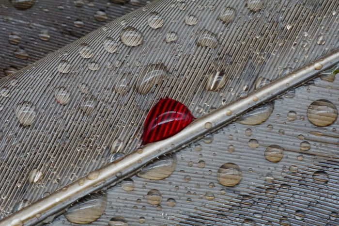 Blood Blooddrops Close-up Day Feather  No People Outdoors Rain Raindrops Red Water Waterdrops Wood - Material