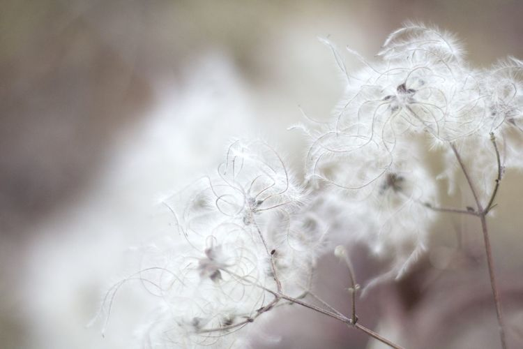 Beauty In Nature Check This Out Close-up Cold Temperature Day Fragility Love Nature No People Outdoors Plant Snow Tree Winter