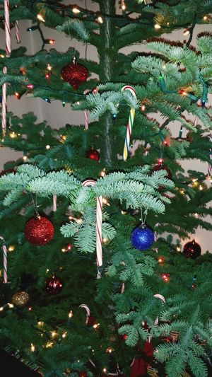 Christmas Tree Fresh Cut Noble Christmas Ornaments