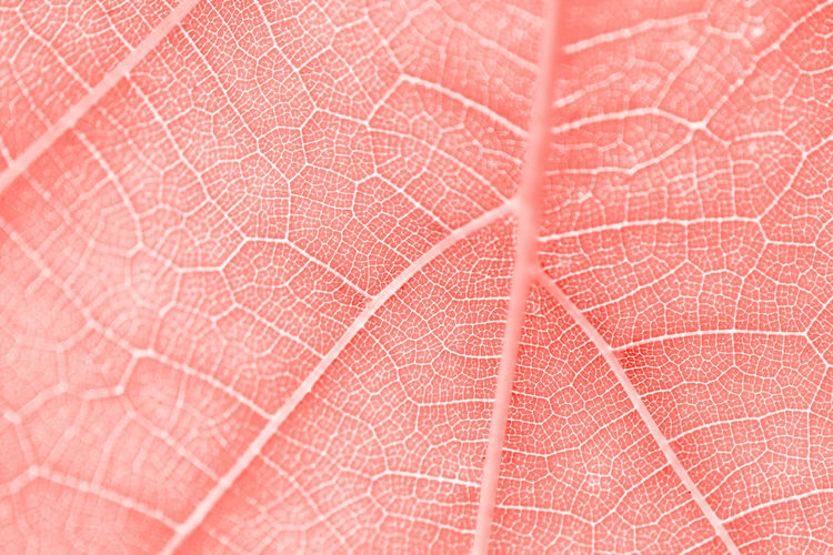 Nature Leaf Leather Macro Red Pattern Brown Clean Indoors  Fragility Textile Close-up Textured  No People Vulnerability  Extreme Close-up Natural Pattern Backgrounds Studio Shot Selective Focus Full Frame Abstract Backgrounds Leaf Vein Textured Effect Textured  Vulnerability  Indoors