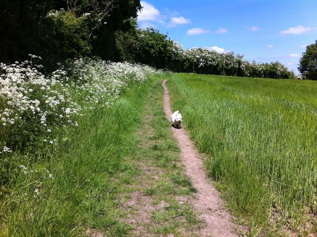 Animal Themes Beauty In Nature Dirt Road Dog Grass Green Color Non-urban Scene One Animal Outdoors Scenics Sky Tranquil Scene Tree
