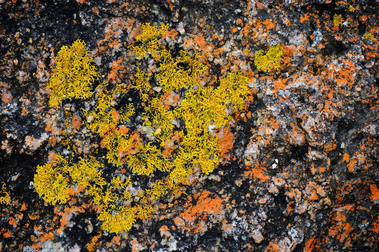 Abstract Nature Lichen Yellow Beauty In Nature Plant No People Close-up Textured  Backgrounds Rock Sea Vulnerability  High Angle View Growth Pattern
