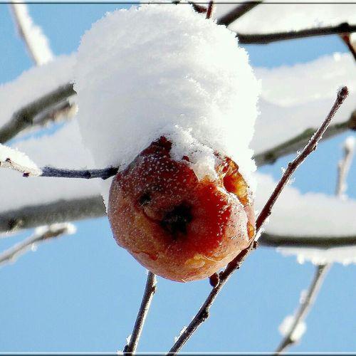 Deepfreeze яблоко в снегу
