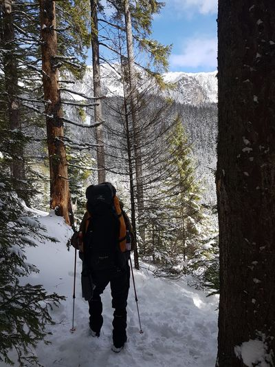 Activity Backpack Beauty In Nature Cold Temperature Land Leisure Activity Lifestyles Mountain Nature Non-urban Scene One Person Outdoors Plant Real People Rear View Snow Standing Tree Warm Clothing Winter