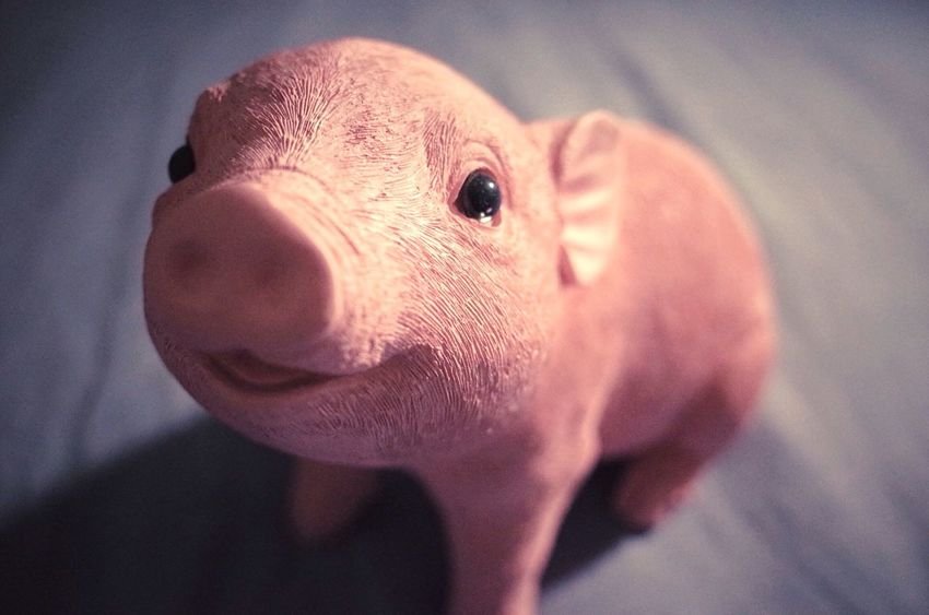 Little pig piggy bank tears