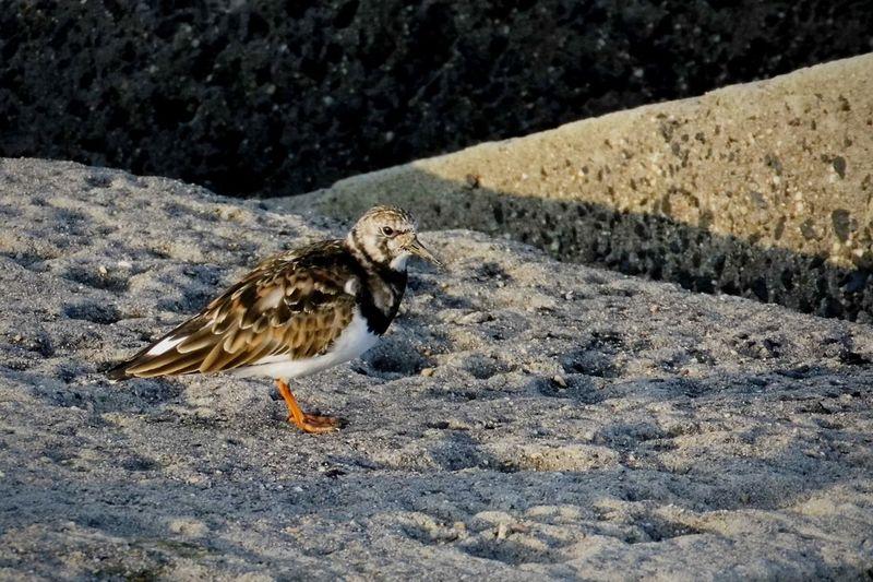 Bird Sand Animal Themes Close-up Perching Beak