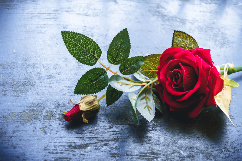 Close-up of red roses on table