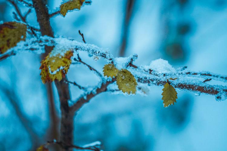 Snowy days - best days