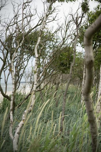 Auszeit an der Ostsee Baltic Sea Exploring Nature Naturschutzgebiet Ostsee Ostseeküste Travel Beauty In Nature Branch Day Environment Field Forest Grass Green Color Growth Land Landscape Nature No People Ocean Outdoors Plant Scenics - Nature Tranquil Scene Tranquility Tree Tree Trunk Trunk