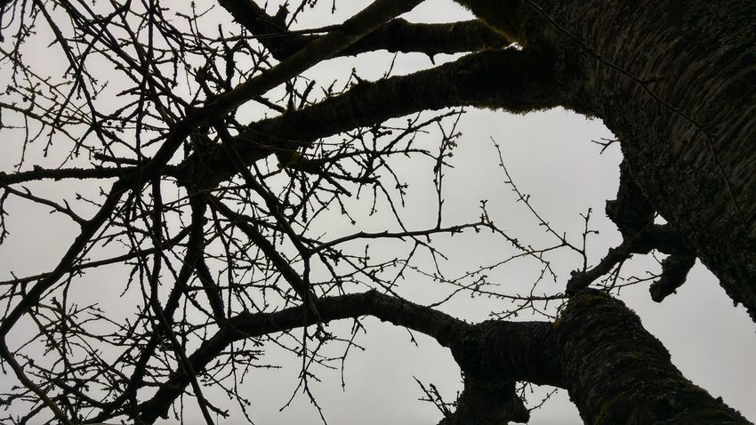 Tree Sky Taking Photos Nature Outdoors No People Growth Day Beauty In Nature