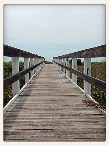 Nature_collection My Way on Sanibel Island Nature