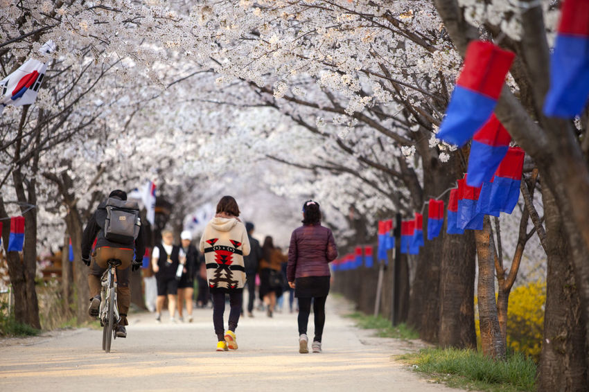 Anyangcheon Bycicle Cheongsachorong Cherry Blossom Day Footpath Full Length The Street Photographer - 2016 EyeEm Awards Leisure Activity Lifestyles Medium Group Of People Men On The Move Person Rear View Road Season  Showcase April Spring Time Street The Way Forward Transportation Tree Umbrella Walking