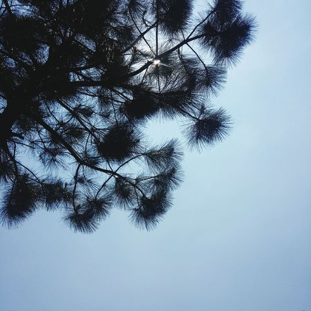 Tsing Yi 青衣自然徑 Tree Leaves Sky Shine Sun Sunlight Hot Sunny Tree Pixelated Branch Silhouette Sky Close-up