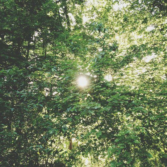 Nature Trees & Sun. EyeEm Nature Lover