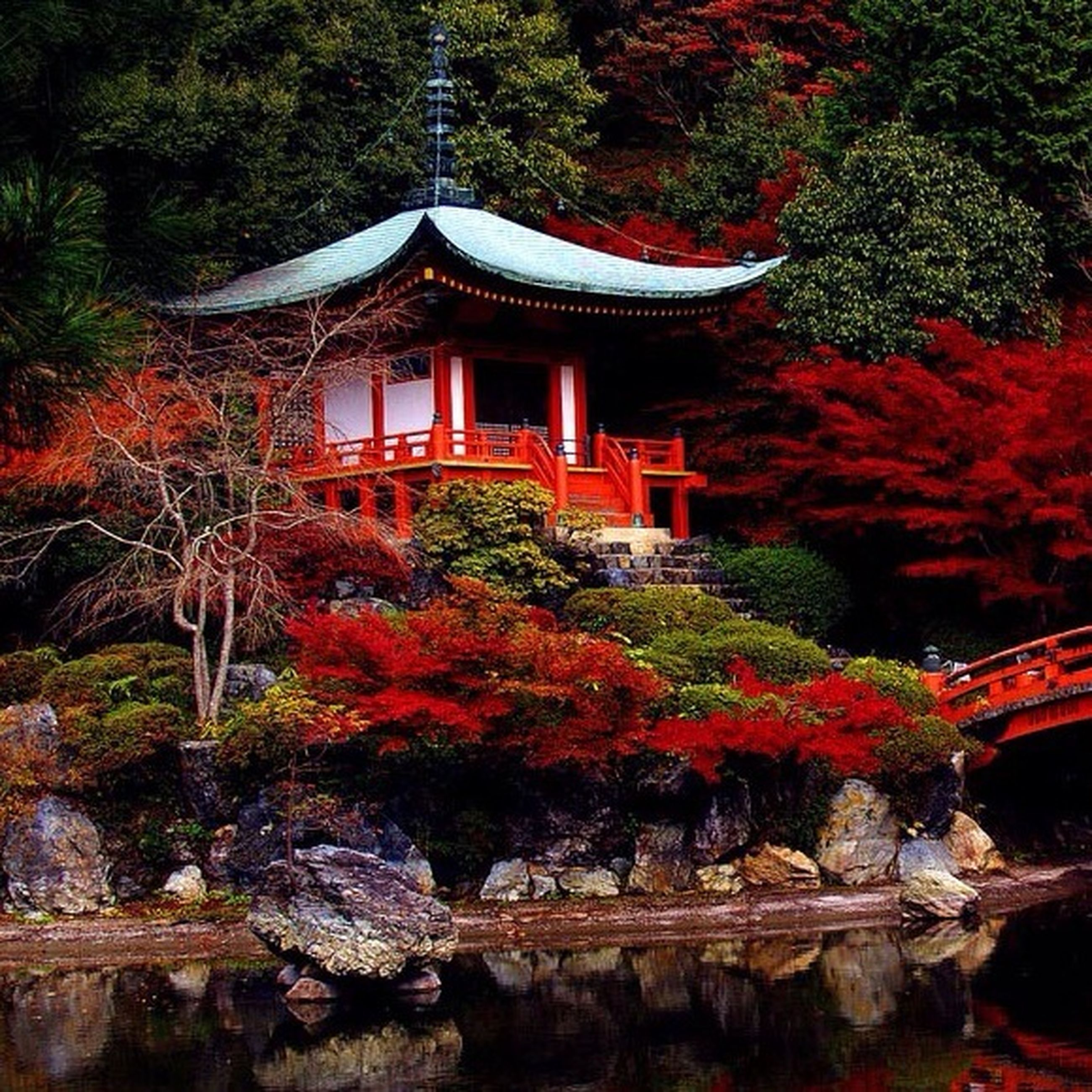 tree, built structure, architecture, building exterior, red, place of worship, temple - building, religion, growth, house, spirituality, nature, day, outdoors, autumn, plant, tradition, culture, beauty in nature