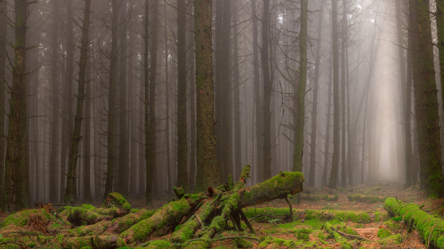 Trees Misty Forest Moss My Best Photo