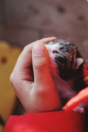 Cropped Hand Of Person Holding Kitten