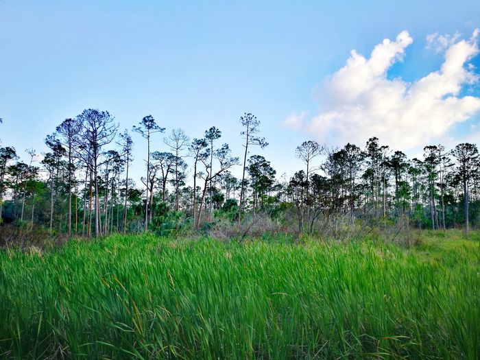 Swamp Green Grass Sky Nature Cloud - Sky Green Color Outdoors Beauty In Nature Growth Day Landscape No People Tree Tranquility Field Plant Scenics