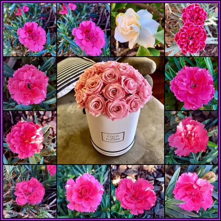 Just a wednesday enjoying and observing nature 🍃🌺😌🌺🍃 Pondering Flowers Of EyeEm Flowers Pinkflowerseries Flowerbox Cocodesfleurs Flowervibes Flower Art Flowervibes🌸🌺🌼 Flowersoftheday Flowerslides Hello EyeEm Have A Good Day Wednesday Flowercollage 👌✌️👍