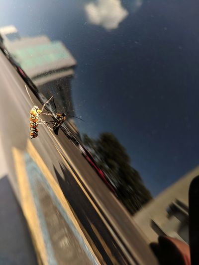 Blurred motion of insect on glass window