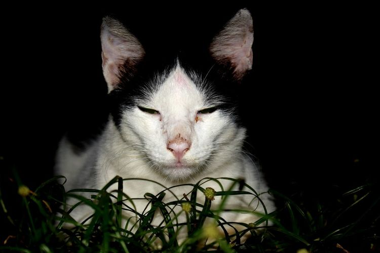Calm Composed Cat Pet Sleepy Black & White Kitten Resting Relax Relaxing Peaceout✌ Jawline Dirty Cat :)