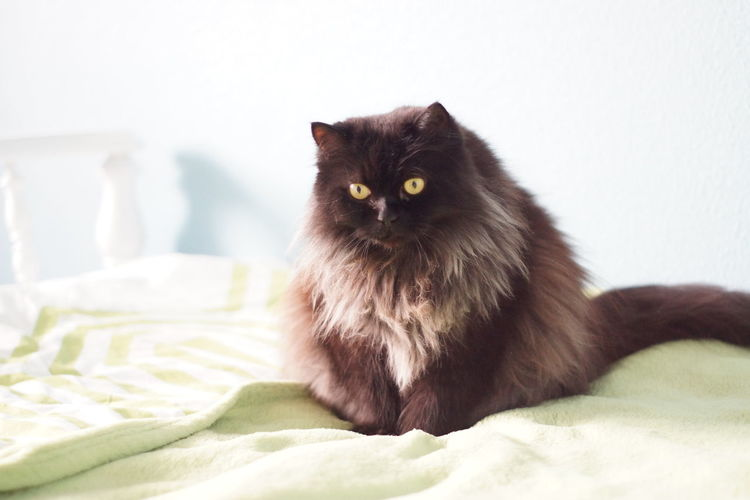 Portrait of cat sitting on bed at home