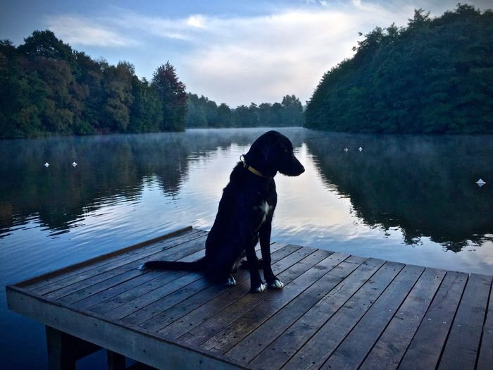 Animal Themes Cloud Day Distant Dog Domestic Animals Lake Mammal Nature One Animal Pets Pier Sitting Sky Sunny Tranquil Scene Tree Water Wood - Material