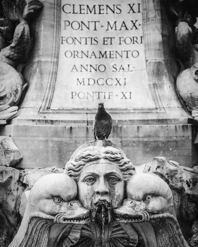 Monument Pidgeon  Rome Text Statue Human Representation Day Sculpture No People Outdoors First Eyeem Photo