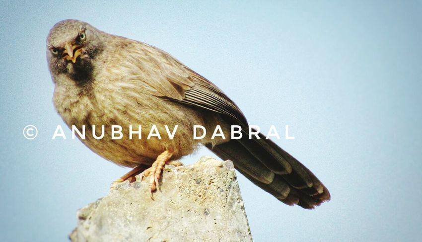 One Animal Animal Wildlife Animal Themes Animals In The Wild Bird