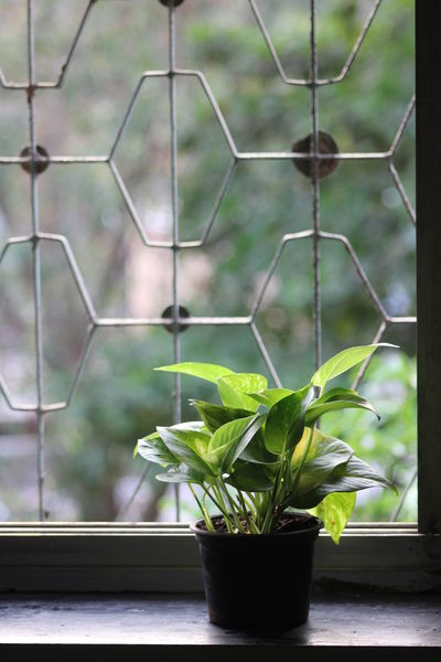 My Old Room Plant Plant Photography Indoor Photography Indoor Gardening Greenleaves Window