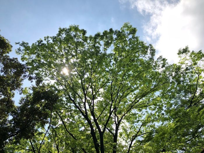 Green Tree Plant Low Angle View Sky Growth Beauty In Nature No People Green Color Nature Outdoors Sunlight