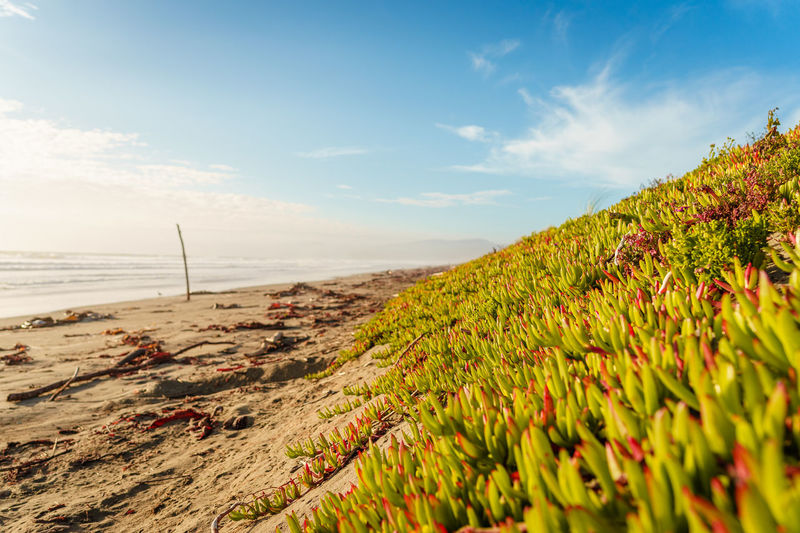 Plants growing on beach against sky