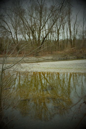 Reflection of bare trees in lake
