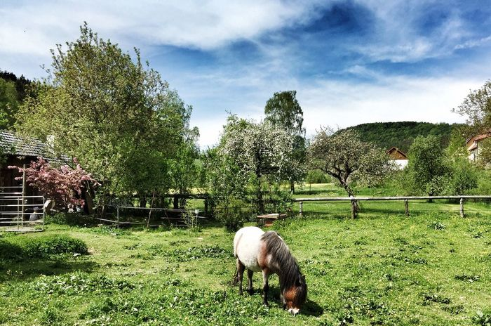 EyeEm Nature Lover Horse Fränkische Schweiz Heiligenstadt Franken Oberfranken Franconia Rural Scenes