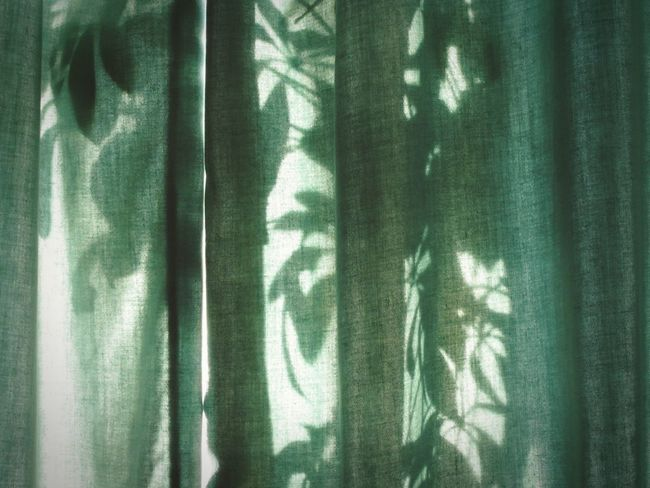 Behind the Curtains Green Green Green!  Curtains Light And Shadow Simplicity Minimalist Enjoying Life Shine On Showcase June June 2016 Lignt Through The Curtains Fabric Umbrella Plant 43 Golden Moments Leaves Only Leaves Abstract Urban Pattern Pieces Deceptively Simple Creative Light And Shadow Shadows Shadow Play Color Palette
