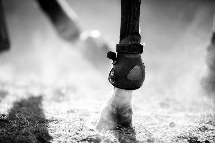Leg Animal Wildlife Animals Horse Horse Photography