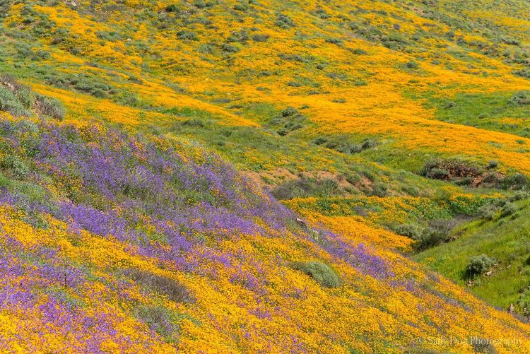 High angle view of yellow flowers on landscape